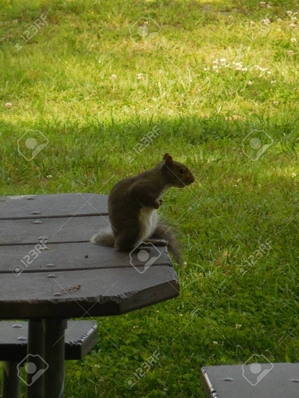Squirrel Stock Photo - 88602897