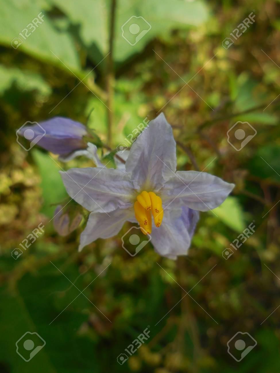 Purple flowers Stock Photo - 88602899