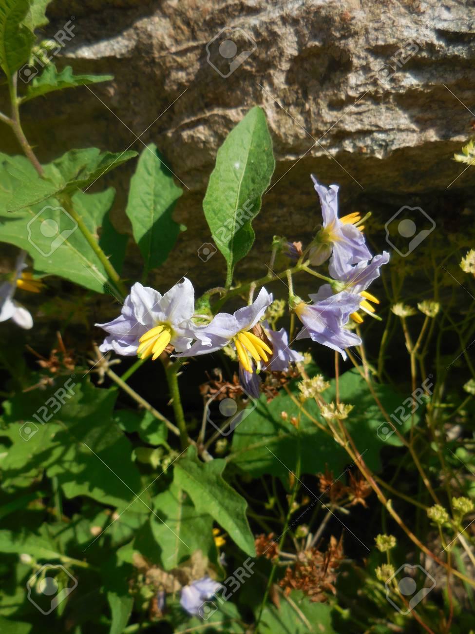 Purple flowers Stock Photo - 88602900