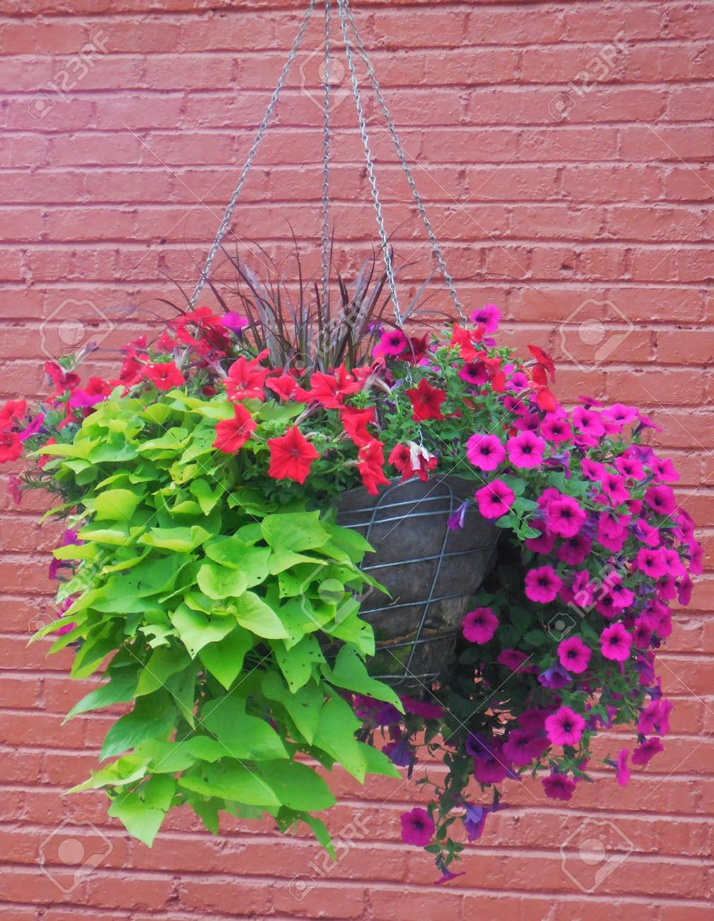 Flowers against a brick wall Stock Photo - 88607253