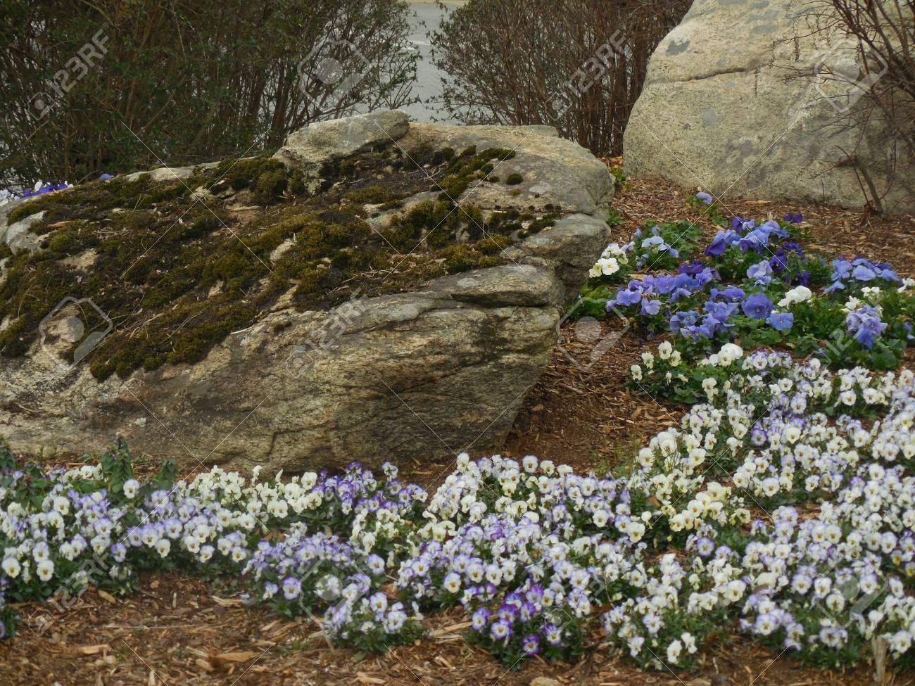 Flowers Stock Photo - 91616951