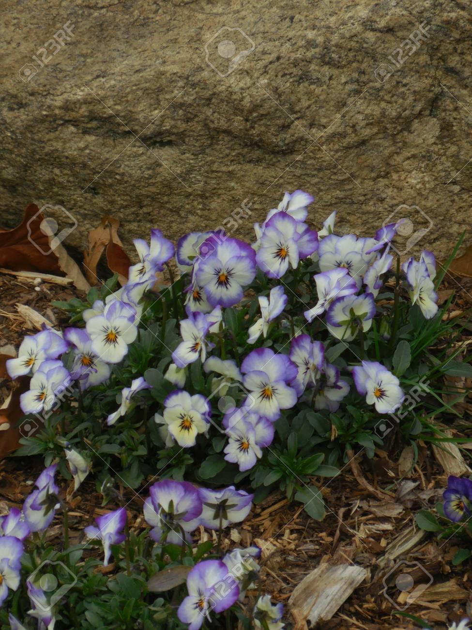 Flowers Stock Photo - 91668269