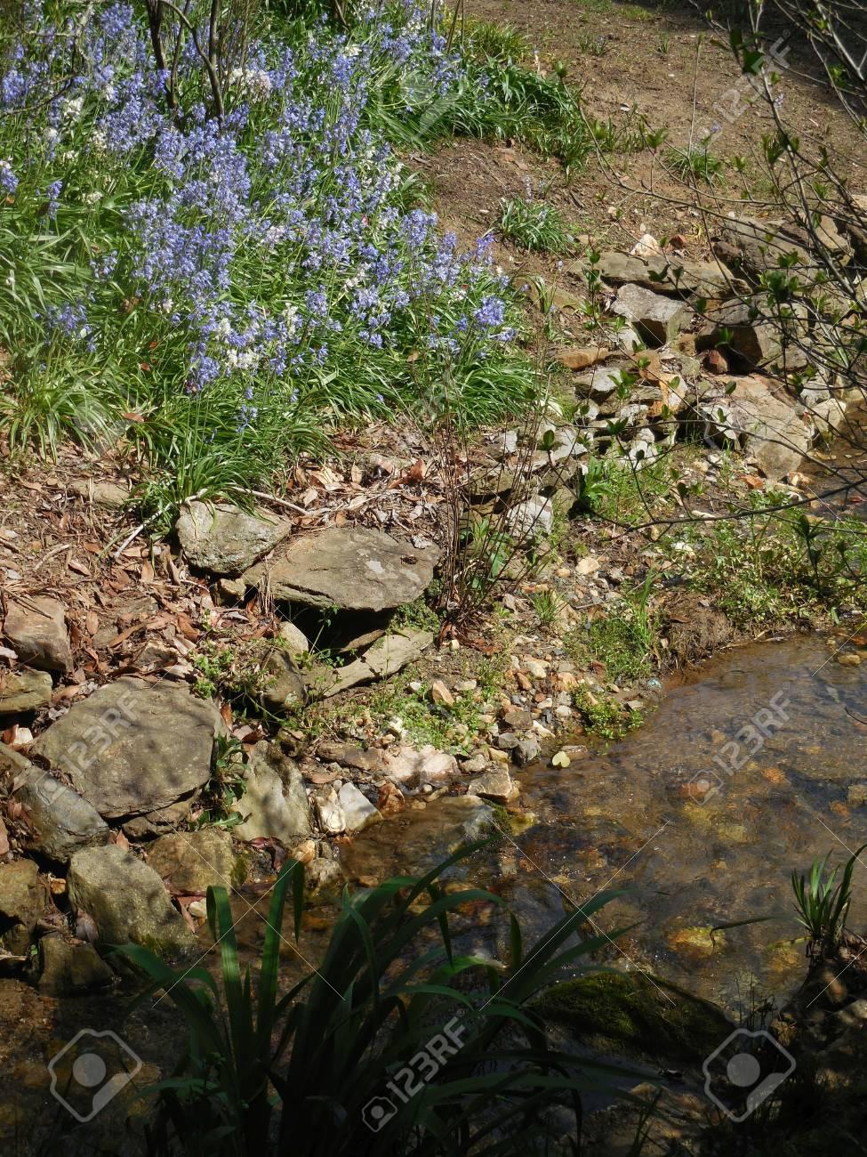 Creek Stock Photo - 91616956