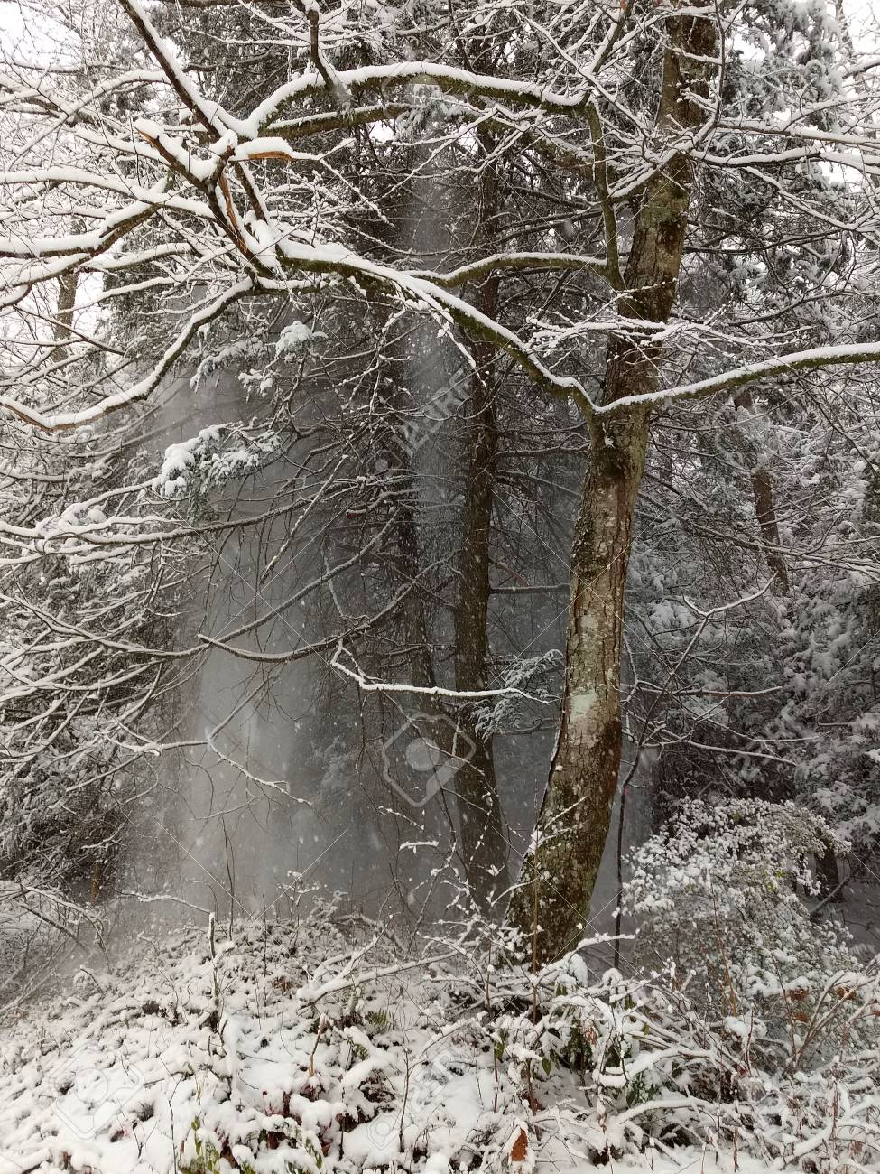 Snow in the woods Stock Photo - 91675853