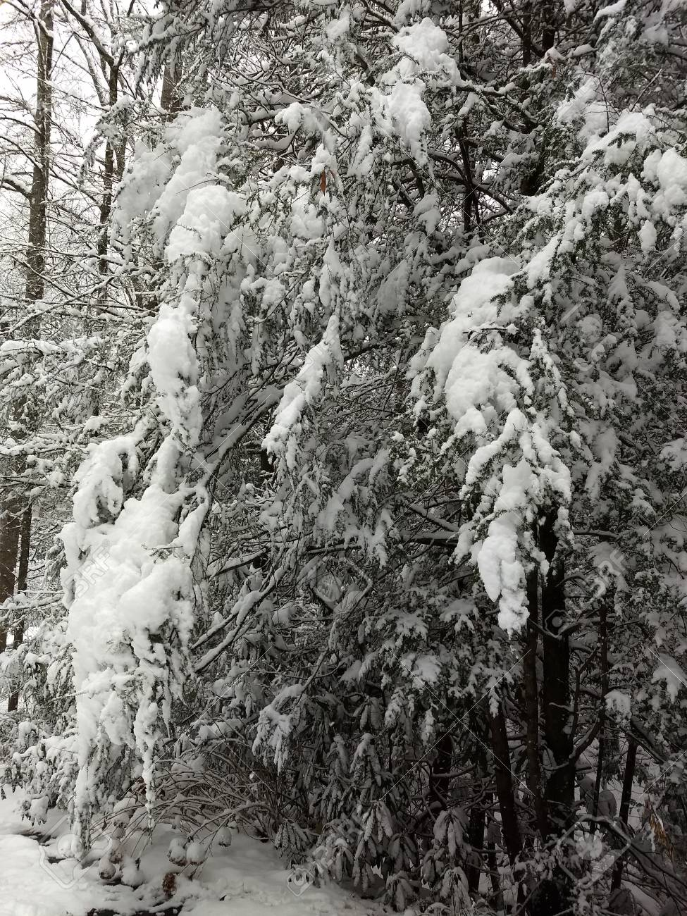 Snow in the woods Stock Photo - 91616991