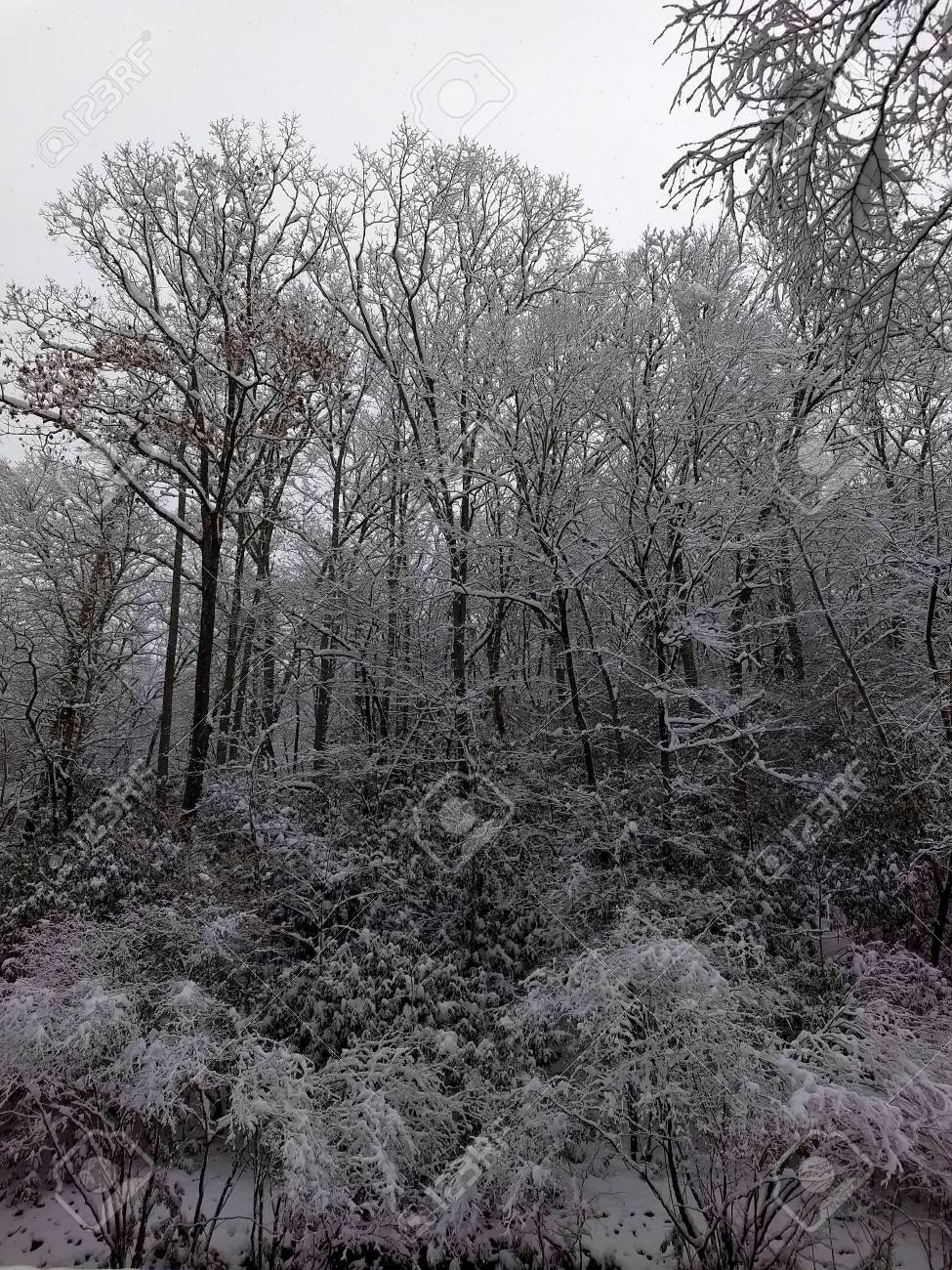 Snow in the woods Stock Photo - 91675854