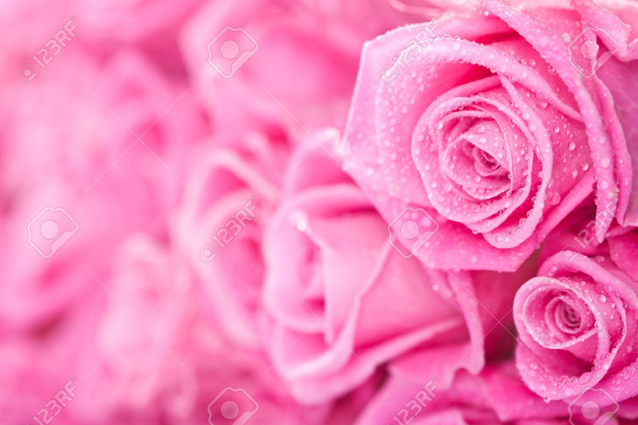 Habrumalas Pink Roses Images