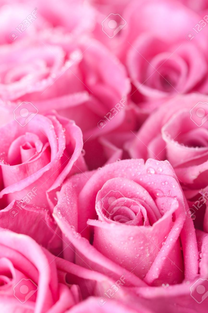 Beautiful pink roses background, bridal bouquet Stock Photo - 14842375