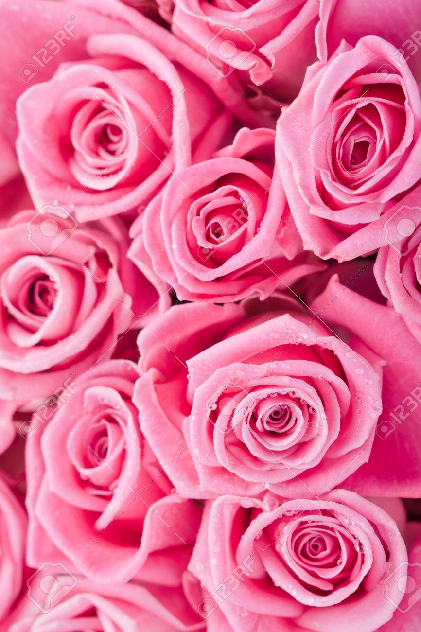 Beautiful pink roses background, bridal bouquet Stock Photo - 14953889