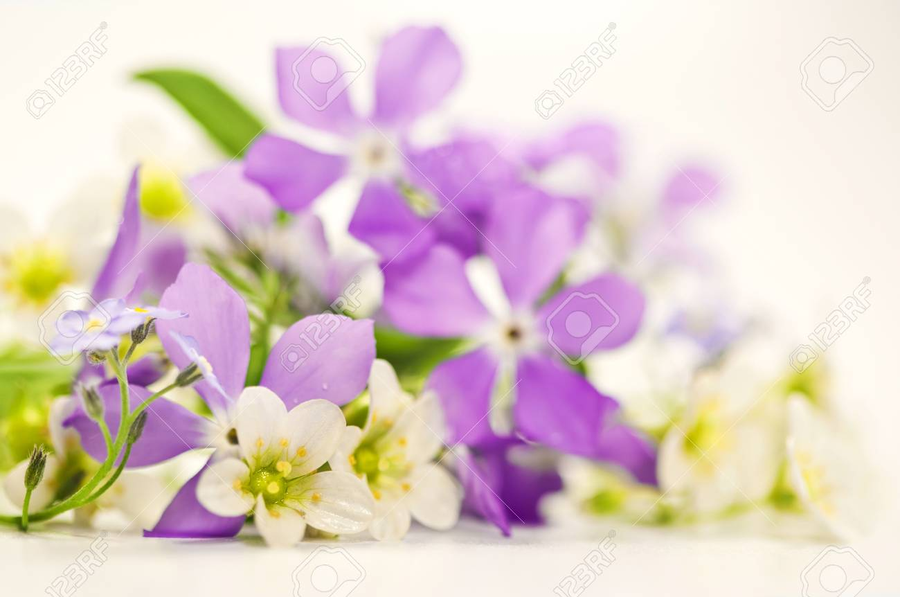 Bouquet of spring flowers on a white background Stock Photo - 19009043