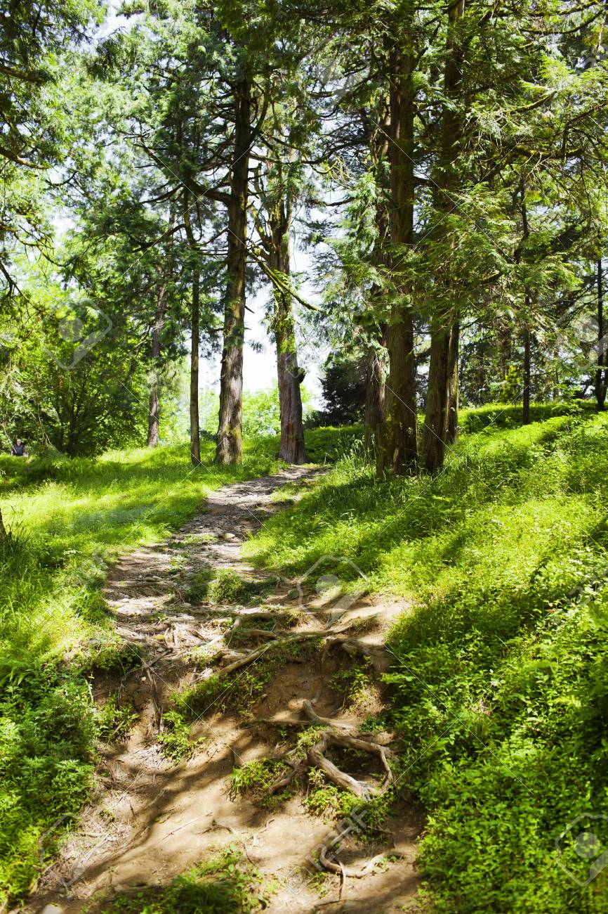Forest path in the sunny summer day Stock Photo - 21702826