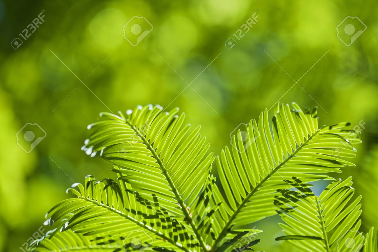 Fresh green leaves in the spring. Stock Photo - 21702832