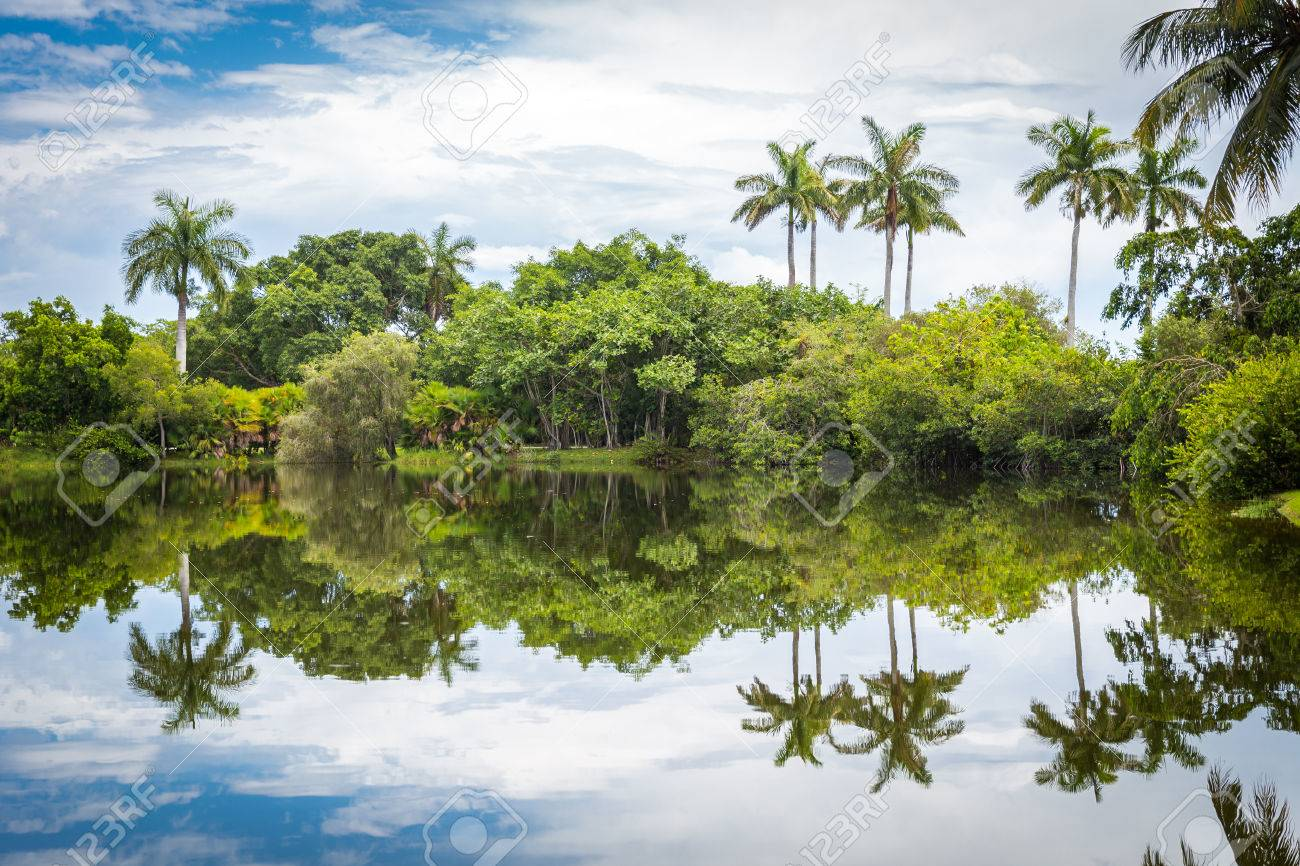 Fairchild Tropical Botanical Garden, Miami, FL, USA. Beautiful Palm Trees  With Reflection