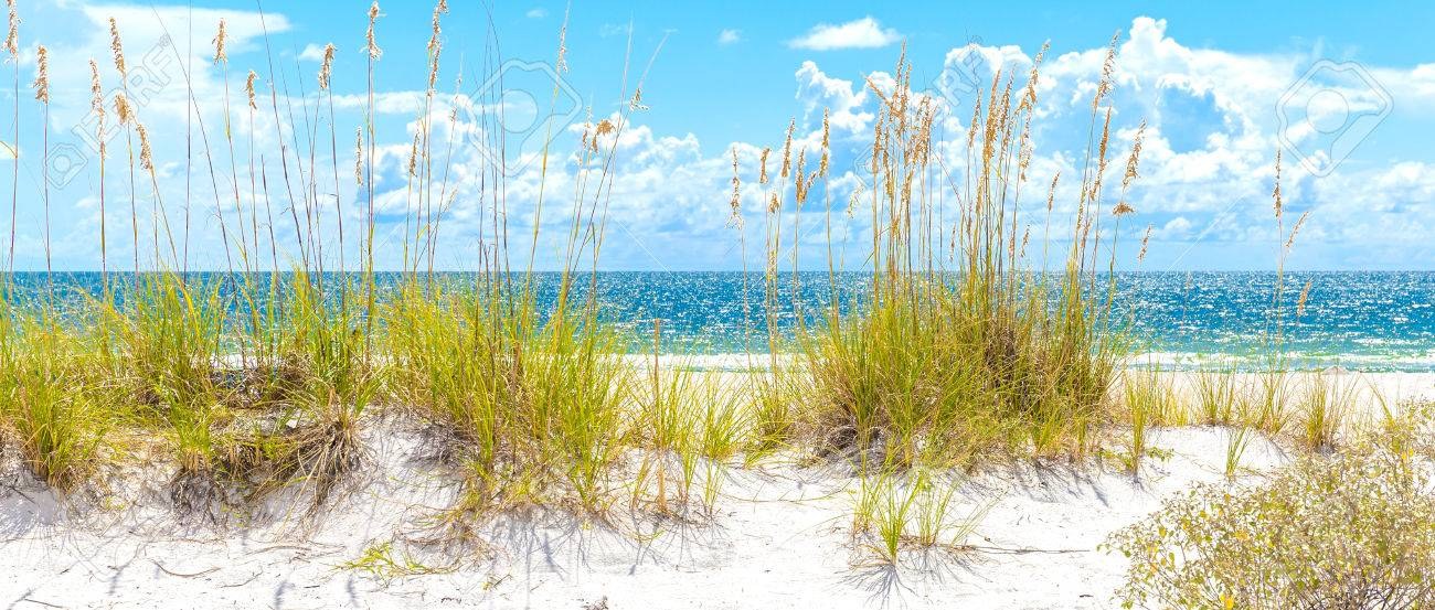 sunny St. Pete beach with sand dunes and blue sky in Florida - 43025103