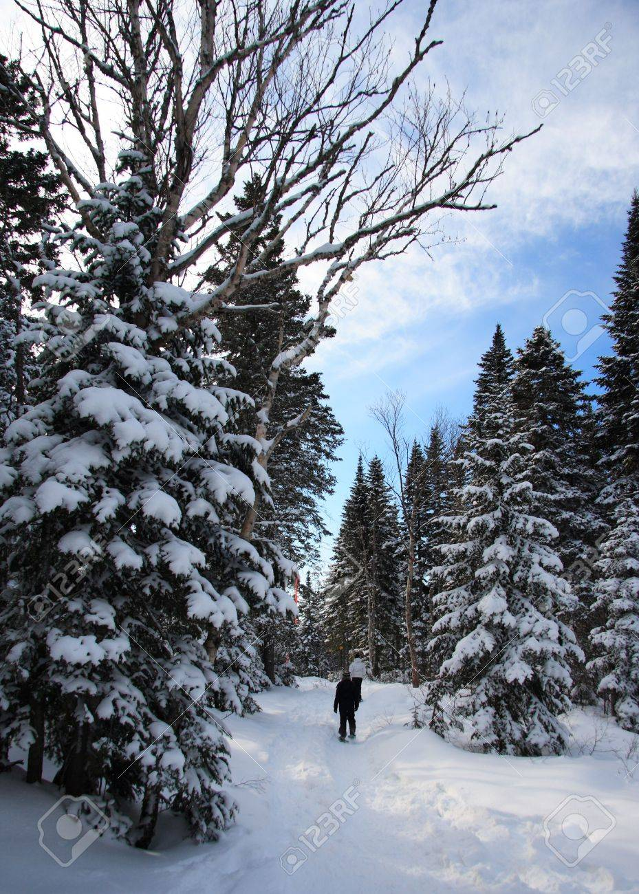 snowshoeing in pine forest near Baie Saint-Paul, Quebec, Canada Stock Photo - 4190422