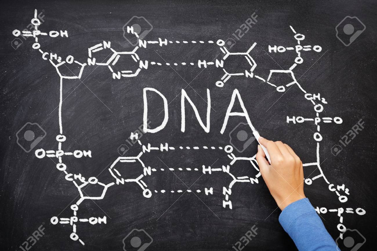 DNA blackboard drawing. Hand drawing chemical structure of DNA on black chalkboard with chalk. Chemisty and biology science education concept. Stock Photo - 10916747