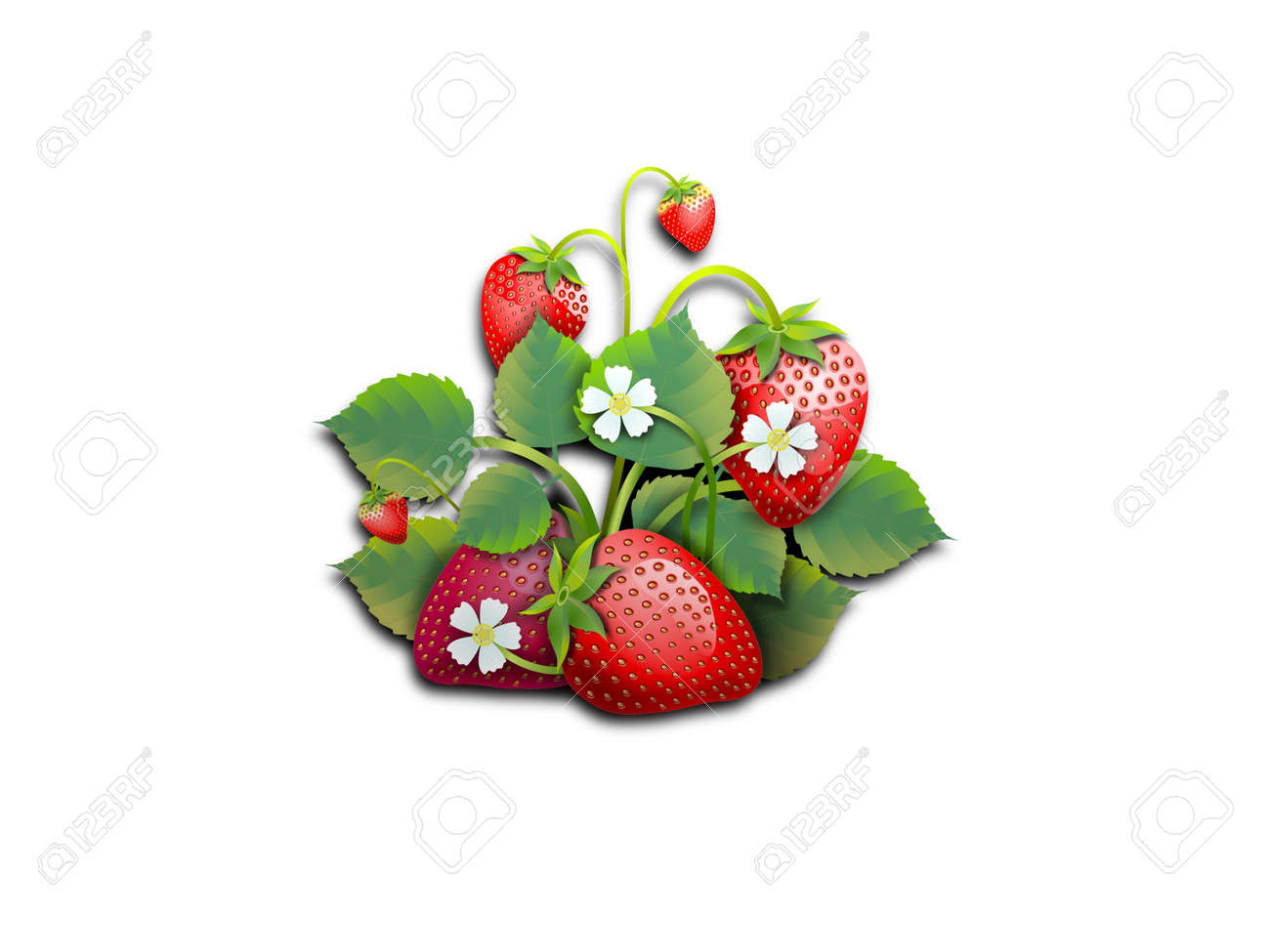 Several strawberries with leaves on white - 154623227