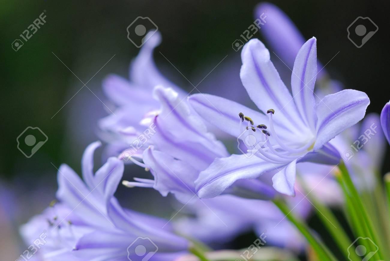Purple flower Stock Photo - 9517861