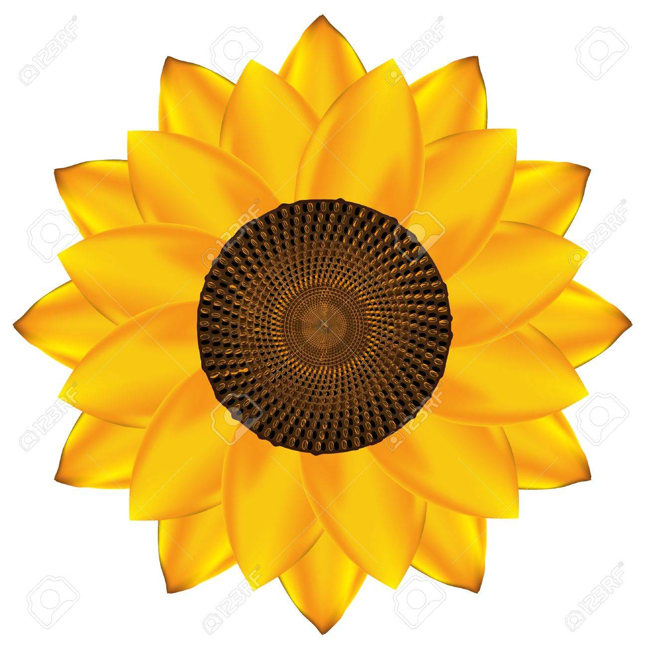 Abstract vector sunflower background. EPS10 Stock Vector - 9842981