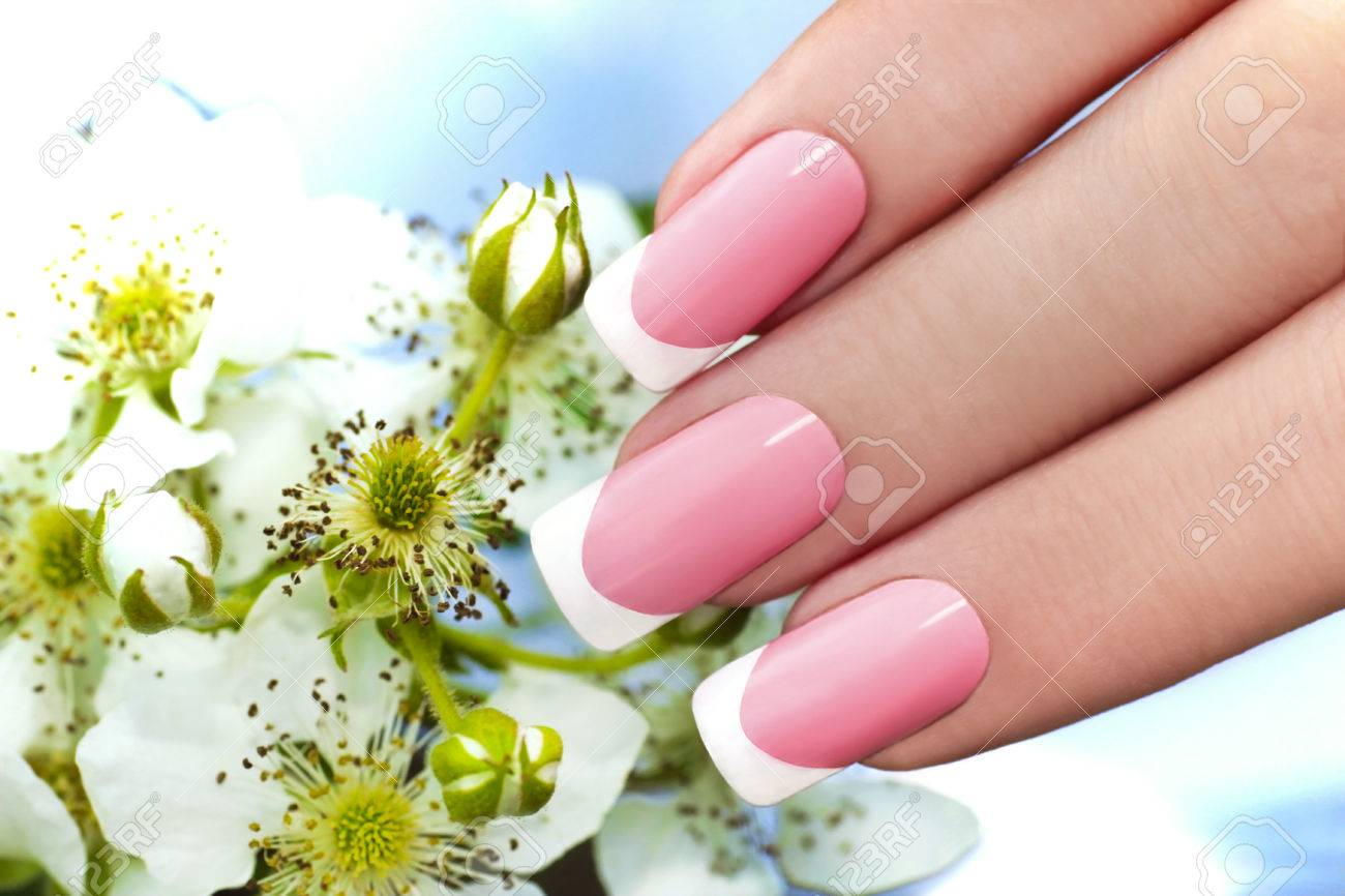 French Manicure With Pink And White Lacquer Against The Background ...