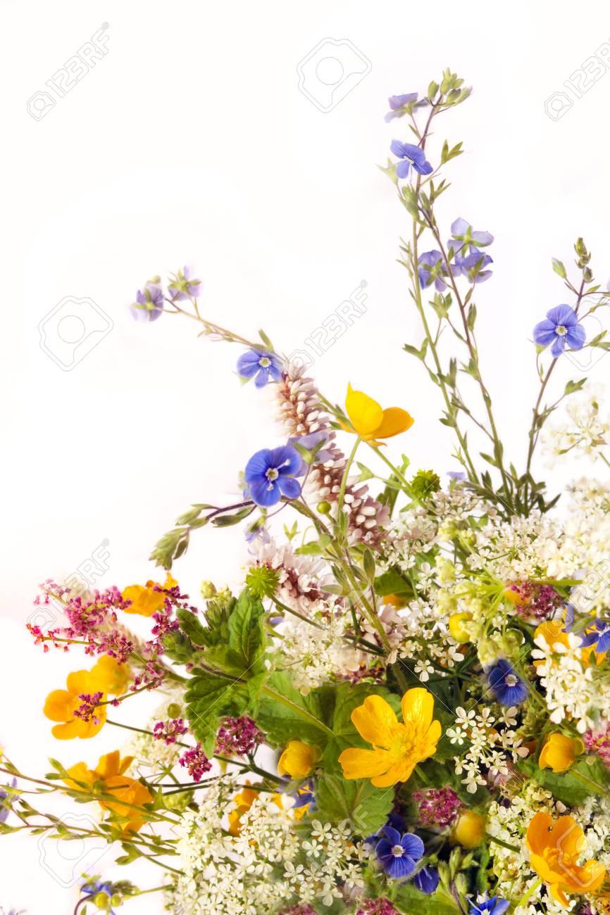 Banque d\u0027images , Bouquet de fleurs de fleurs des champs et des prés sur un  fond blanc.