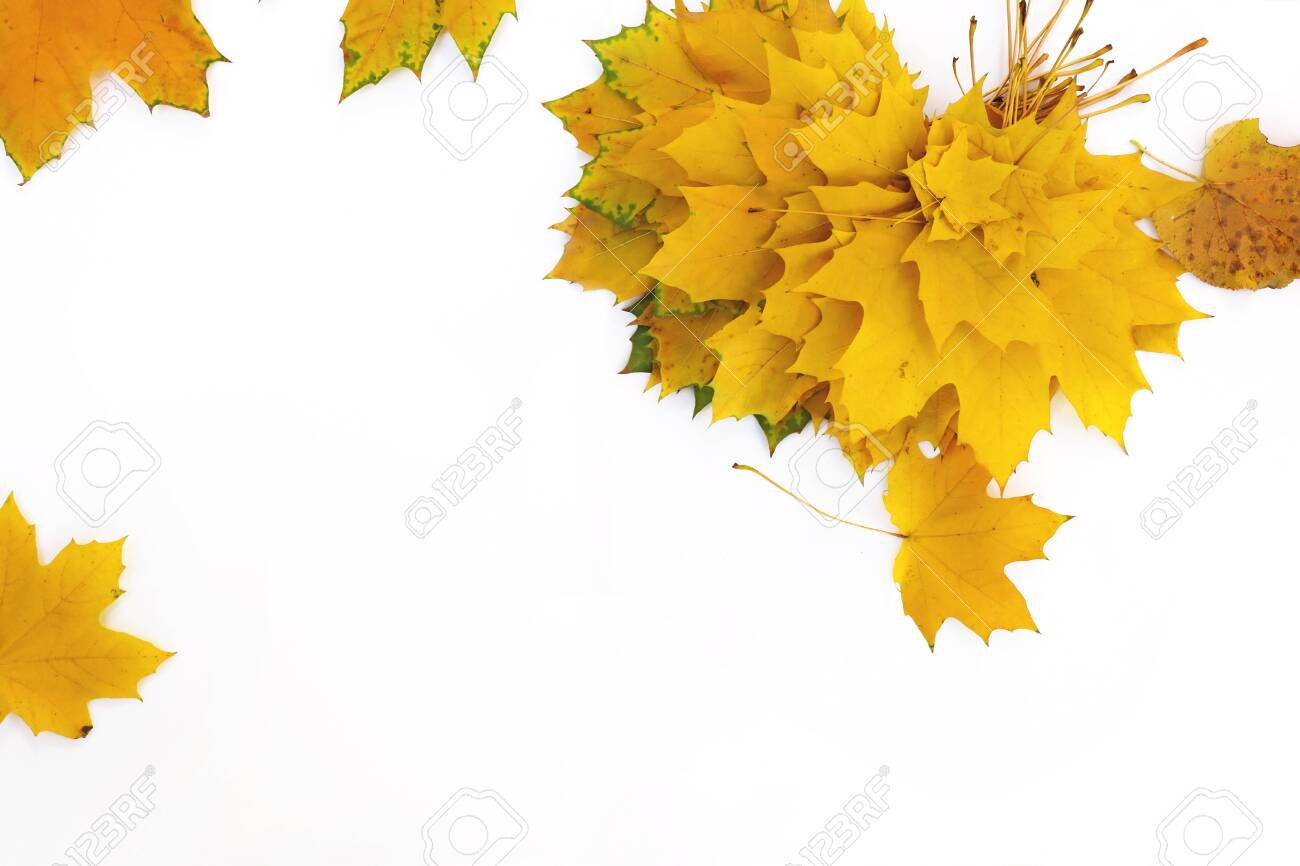 Autumn composition of maple leaves.Yellow leaf on white background. - 131921844