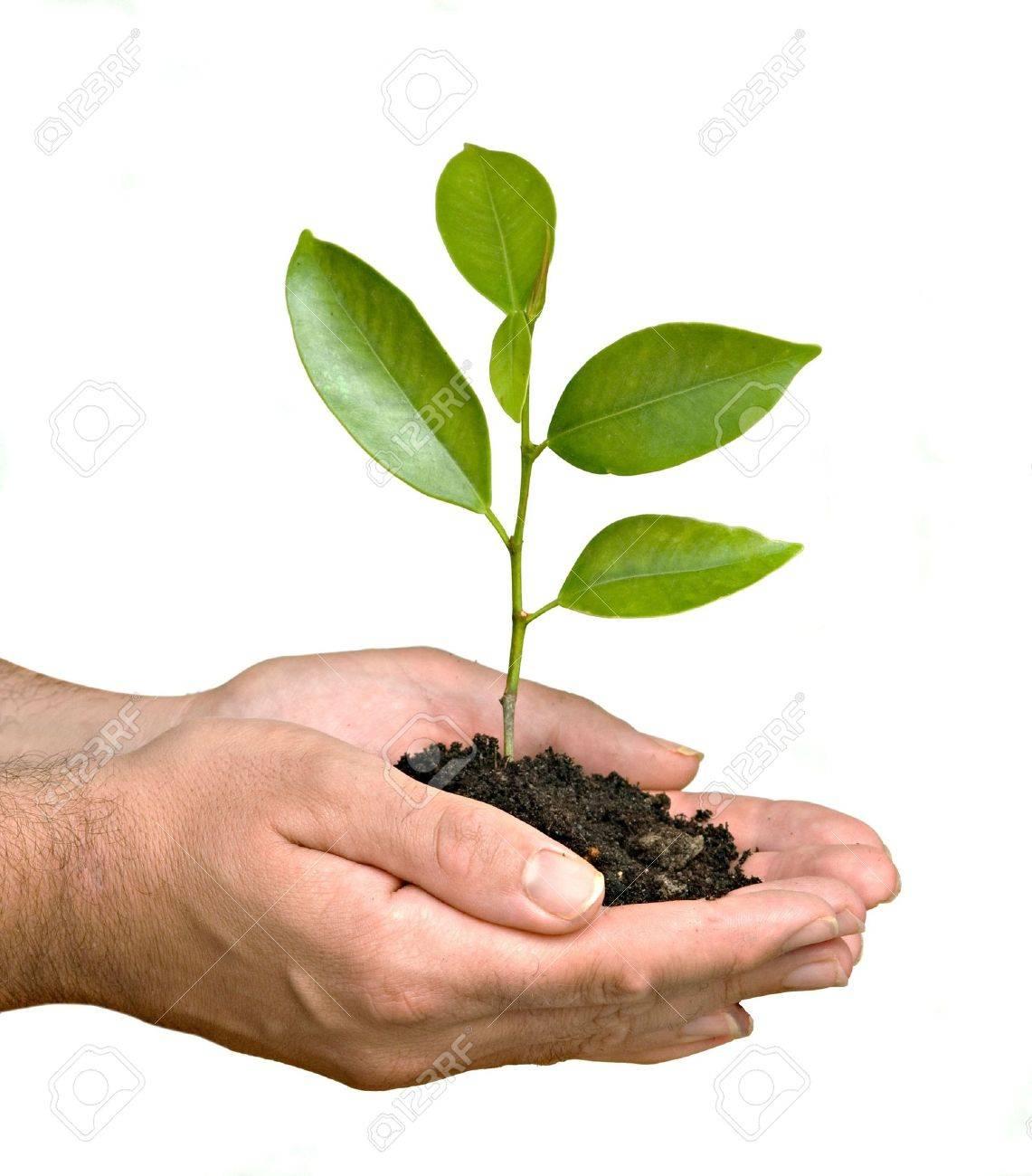 Un brote en palma de la mano como símbolo de la protección de la naturaleza Foto de archivo - 4719161