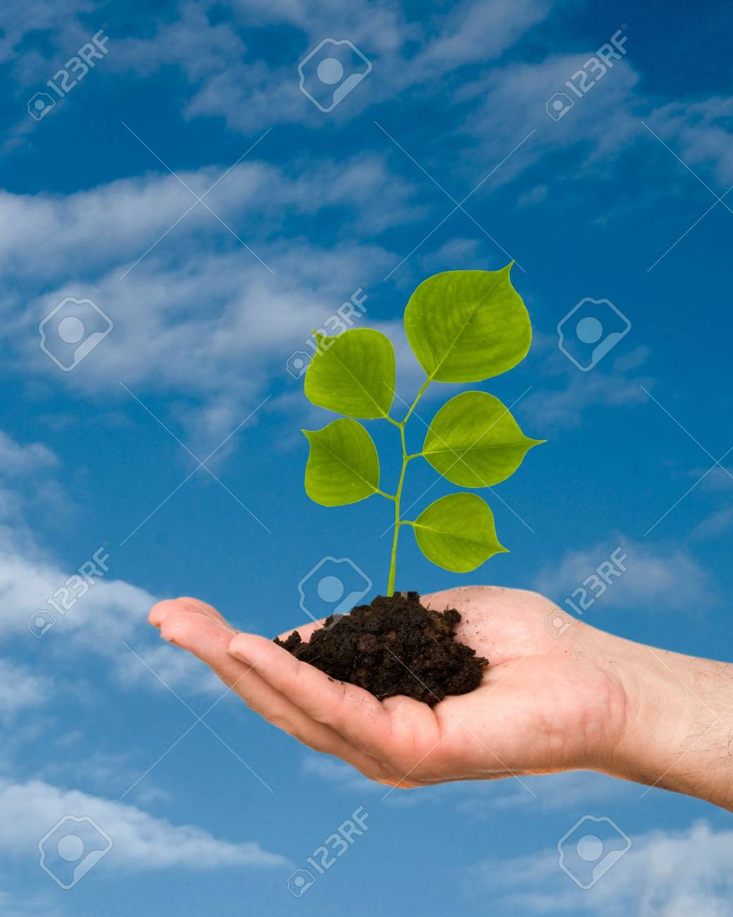 A shoot in palm as a symbol of nature protection Stock Photo - 4974630