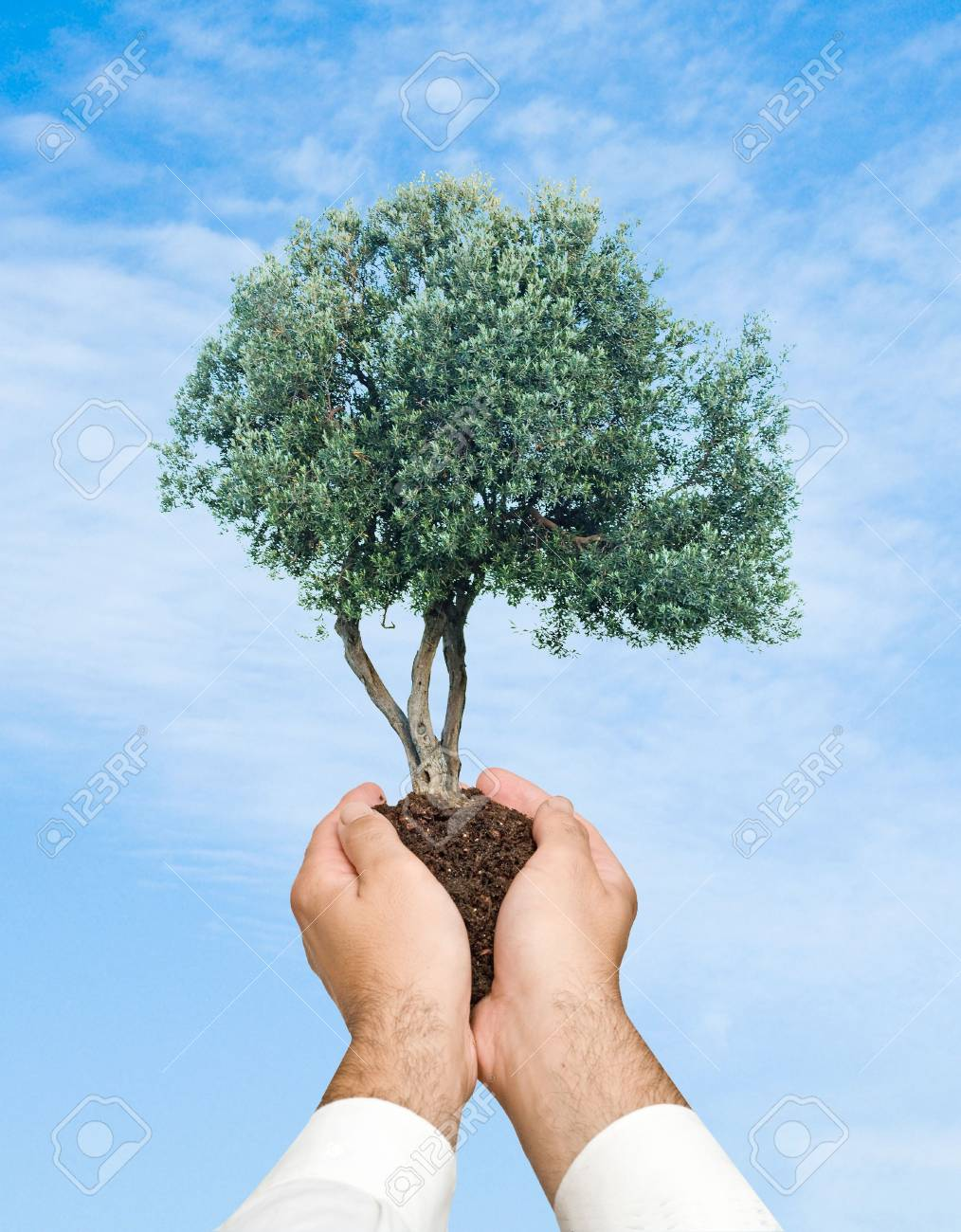 Olive tree in hands as a symbol of nature protection stock photo olive tree in hands as a symbol of nature protection stock photo 6819437 buycottarizona Choice Image