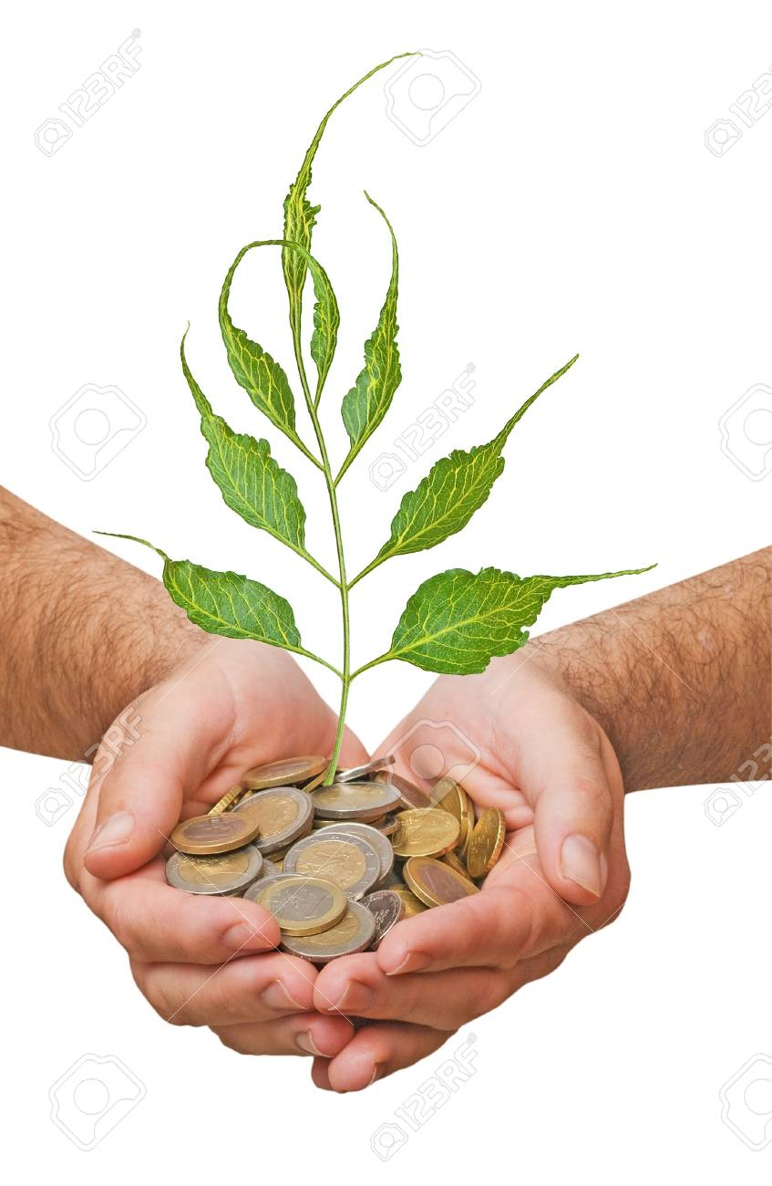 Palms with a tree growing from pile of coins Stock Photo - 7094251