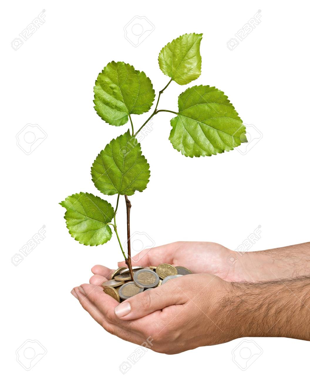 Palms with a tree growng from pile of coins Stock Photo - 7277586