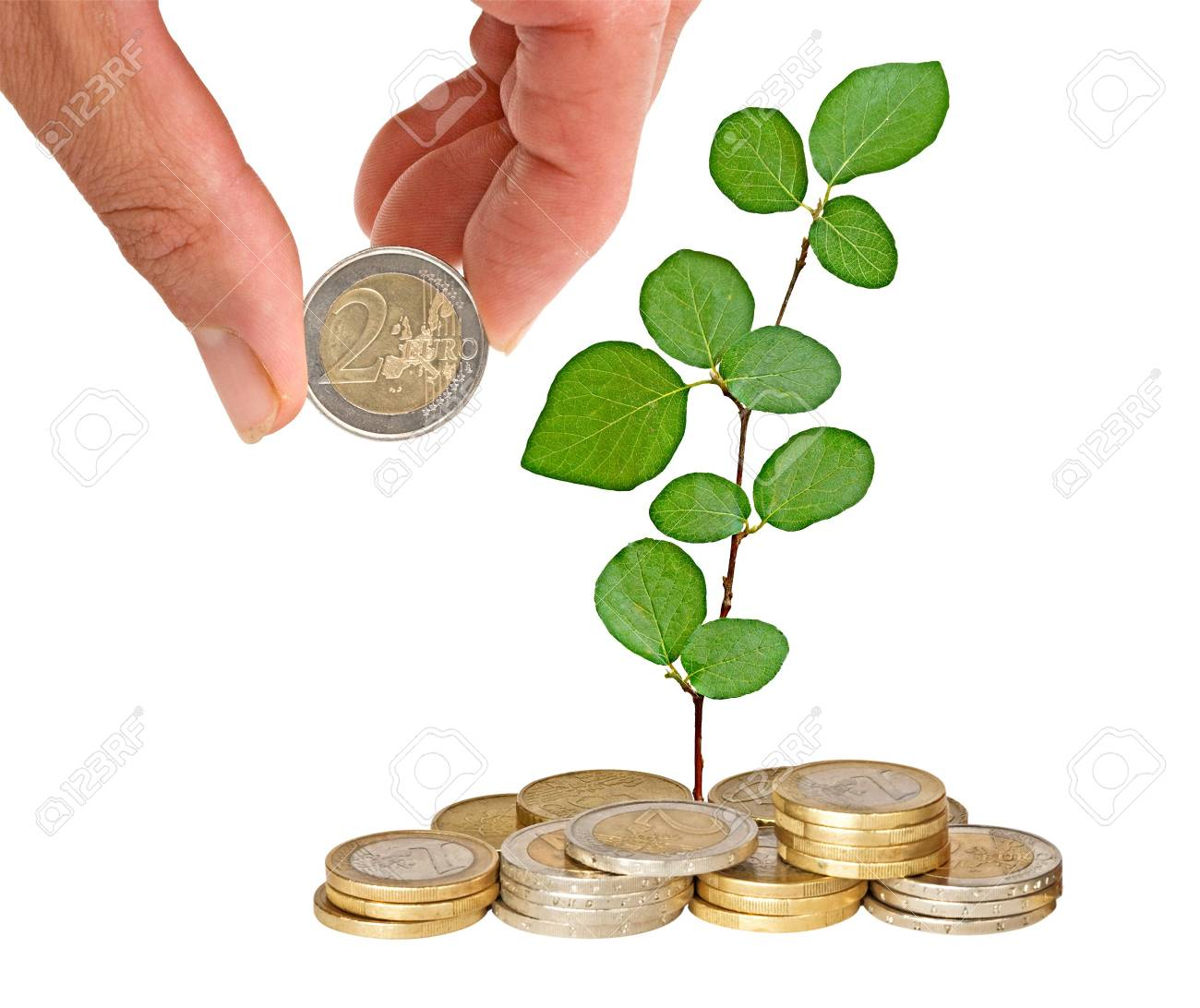 Tree growing from coins Stock Photo - 7705936