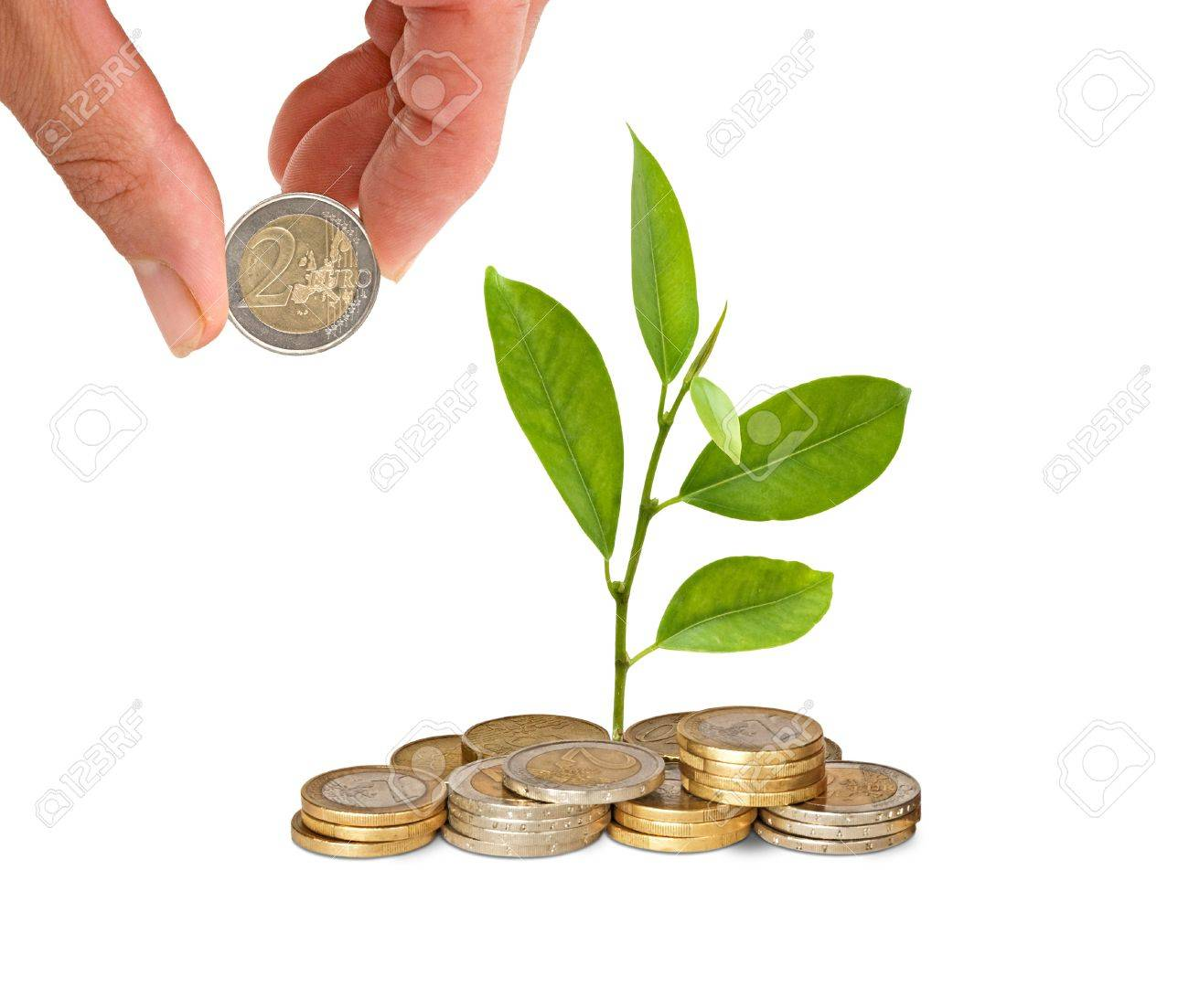 Citrus sapling  growing from pile of coins Stock Photo - 10910277