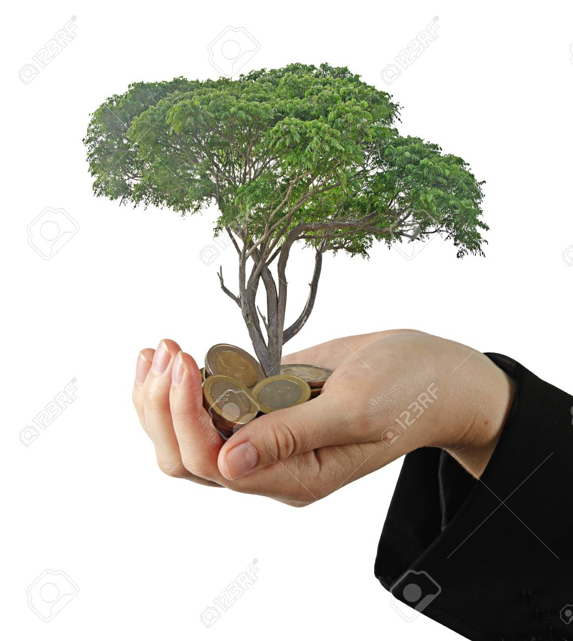 tree growng from pile of coins Stock Photo - 16421263