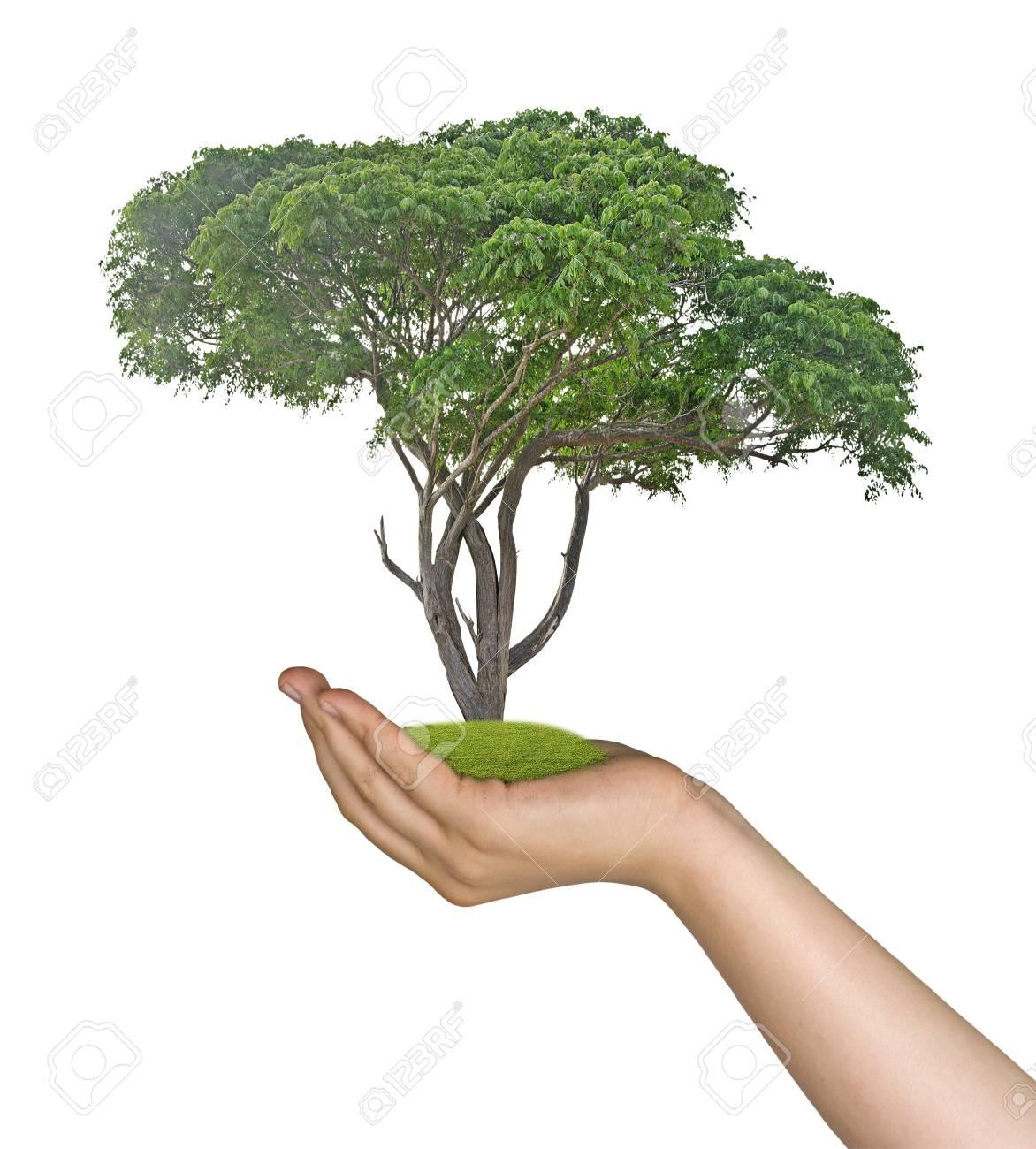 tree in hand Stock Photo - 18039358