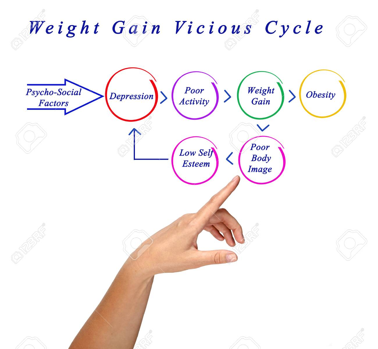 weight gain in cycle