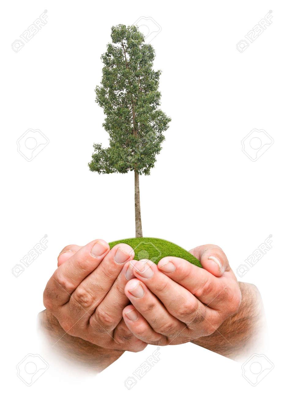 tree in hands - 167899919