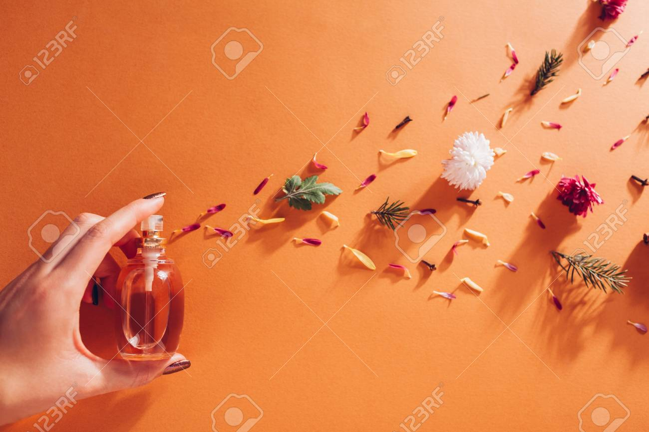 Woman holding bottle of perfume with ingredients. Fragrance of flowers, spices, herbs and fir tree - 113813800