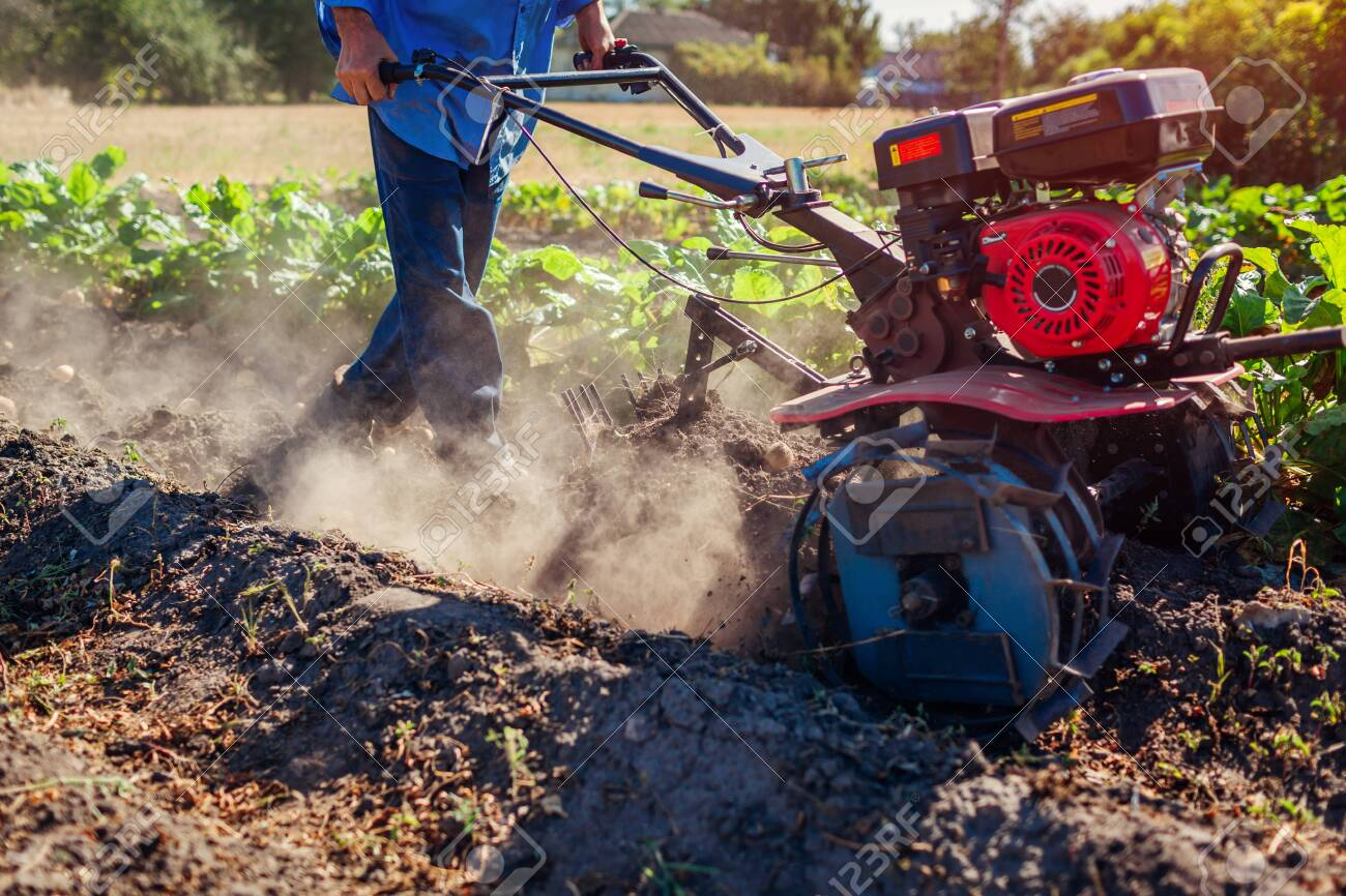 Farmer driving small tractor for soil cultivation and potato digging. Autumn harvest potato picking. Gathering fall crop in countryside - 130654973