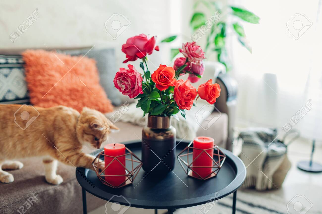 Interior of living room decorated with flowers on coffee table and cat walking on couch and playing. Bouquet of colorful fresh roses - 131375501
