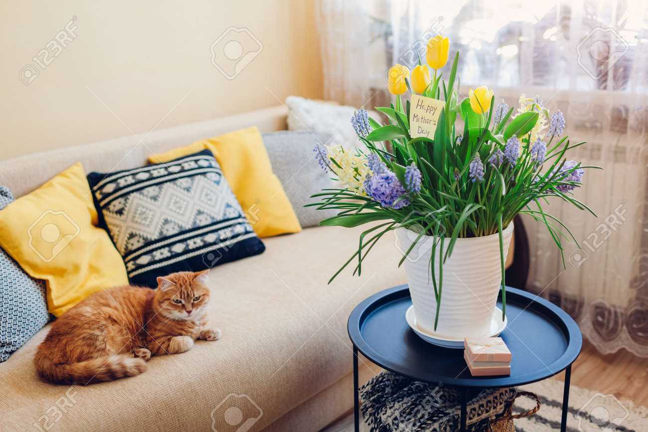 Mother's day present. Pot with blooming spring yellow and blue flowers, gift box and greeting card waits for mom with cat at home. Surprise for holiday with 2021 colors - 168610419