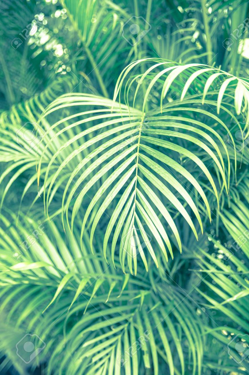 Tropical Palm Leaves Floral Pattern Background Real Photo Stock Photo Picture And Royalty Free Image Image 102619273 Your favourite piece from our refreshed classic collection? tropical palm leaves floral pattern background real photo