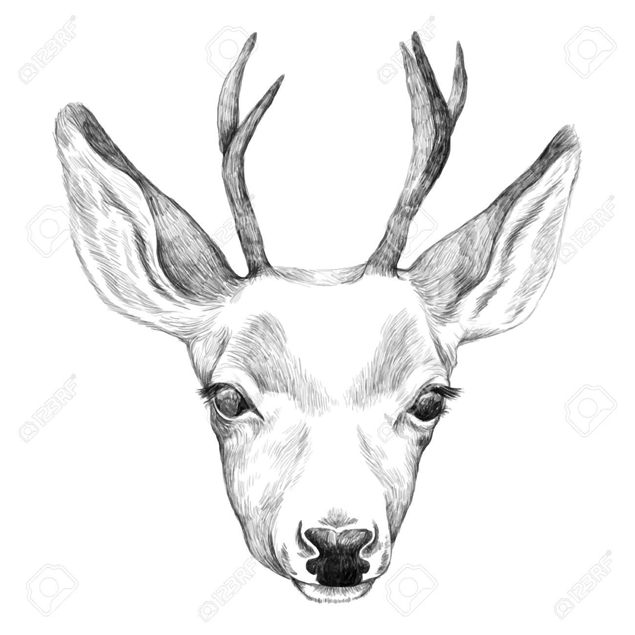 Portrait of deer hand drawn illustration pencil hand drawn sketch stock vector
