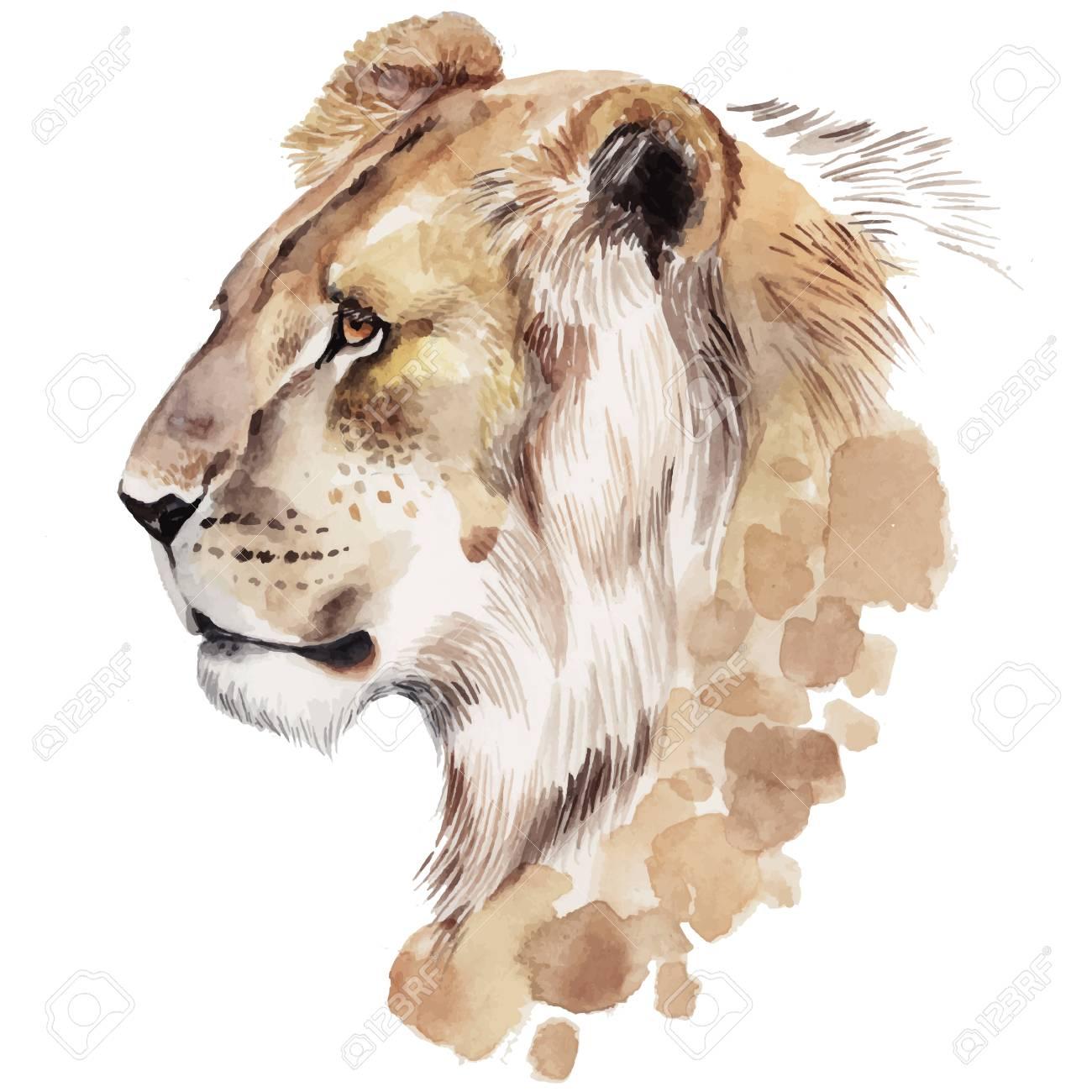 水彩のライオンの肖像画。手描きの動物イラスト ロイヤリティフリー