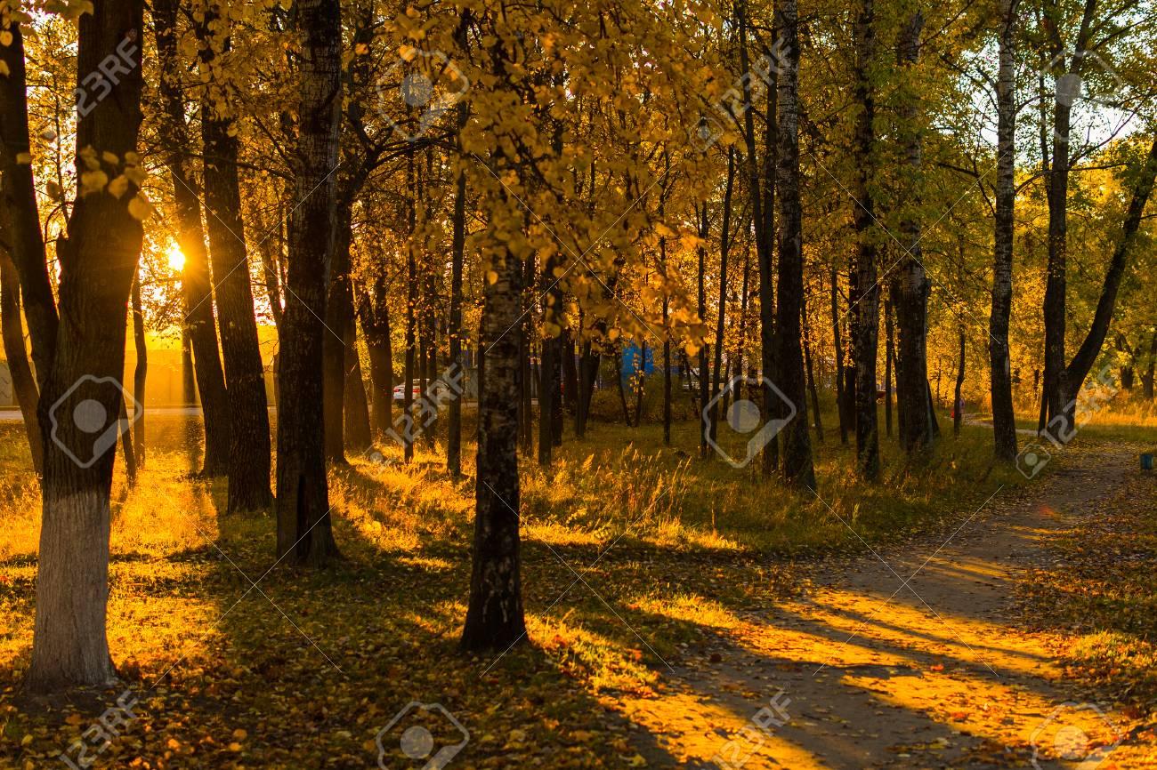 autumn landscape. alley. - 125072024