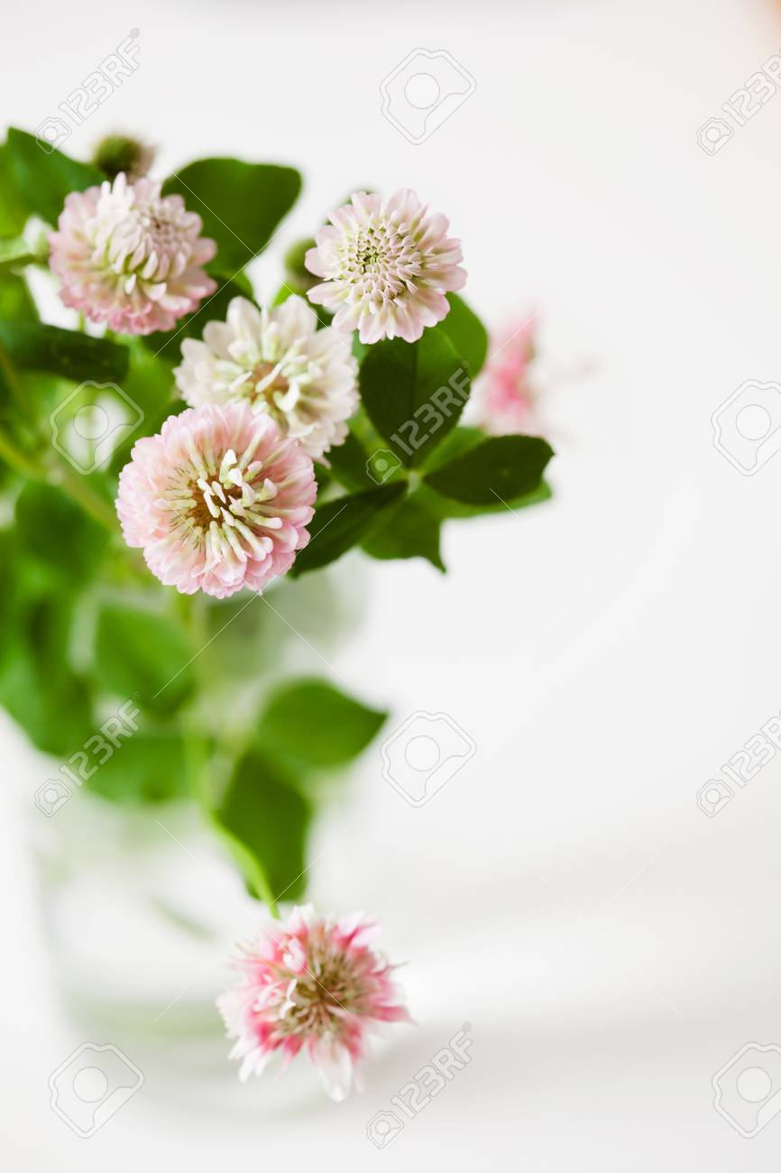 Romantic clover flowers bouquet with leaves on white background romantic clover flowers bouquet with leaves on white background copy space stock photo 85318787 izmirmasajfo