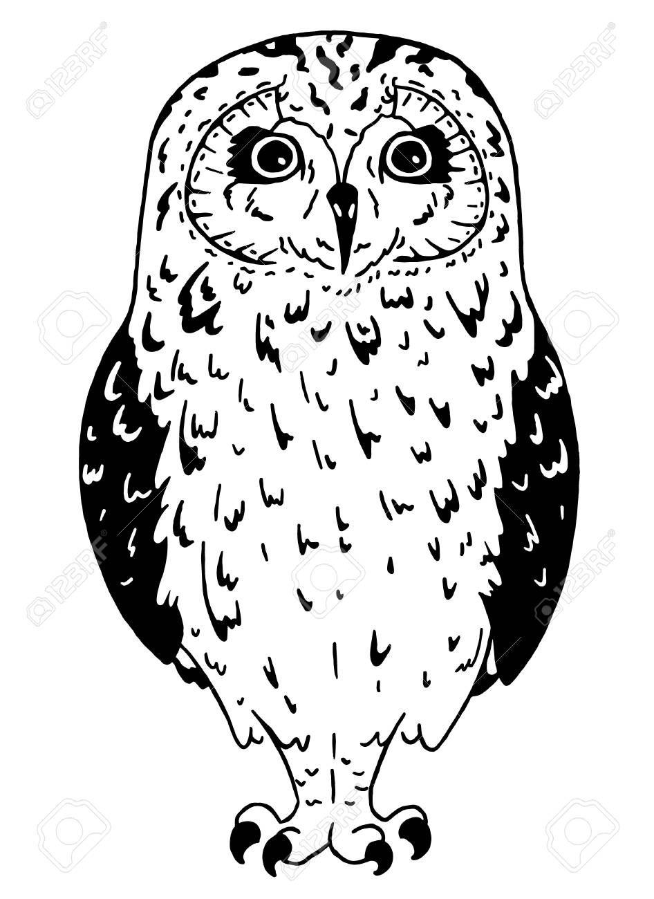 Owl Drawings Black And White Clip Art