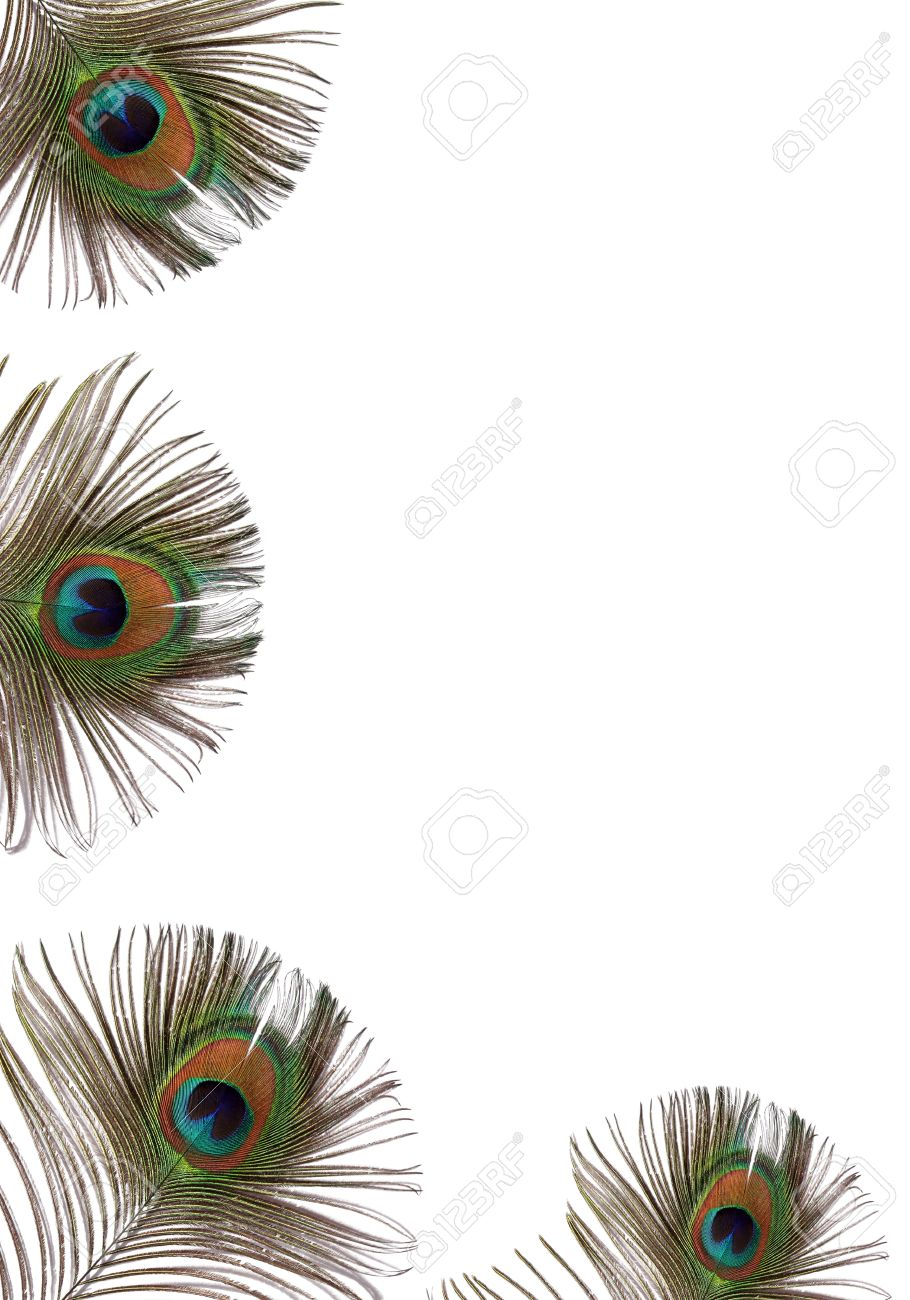 iridescent eyes of four peacock feathers set along the left hand side and bottom of the