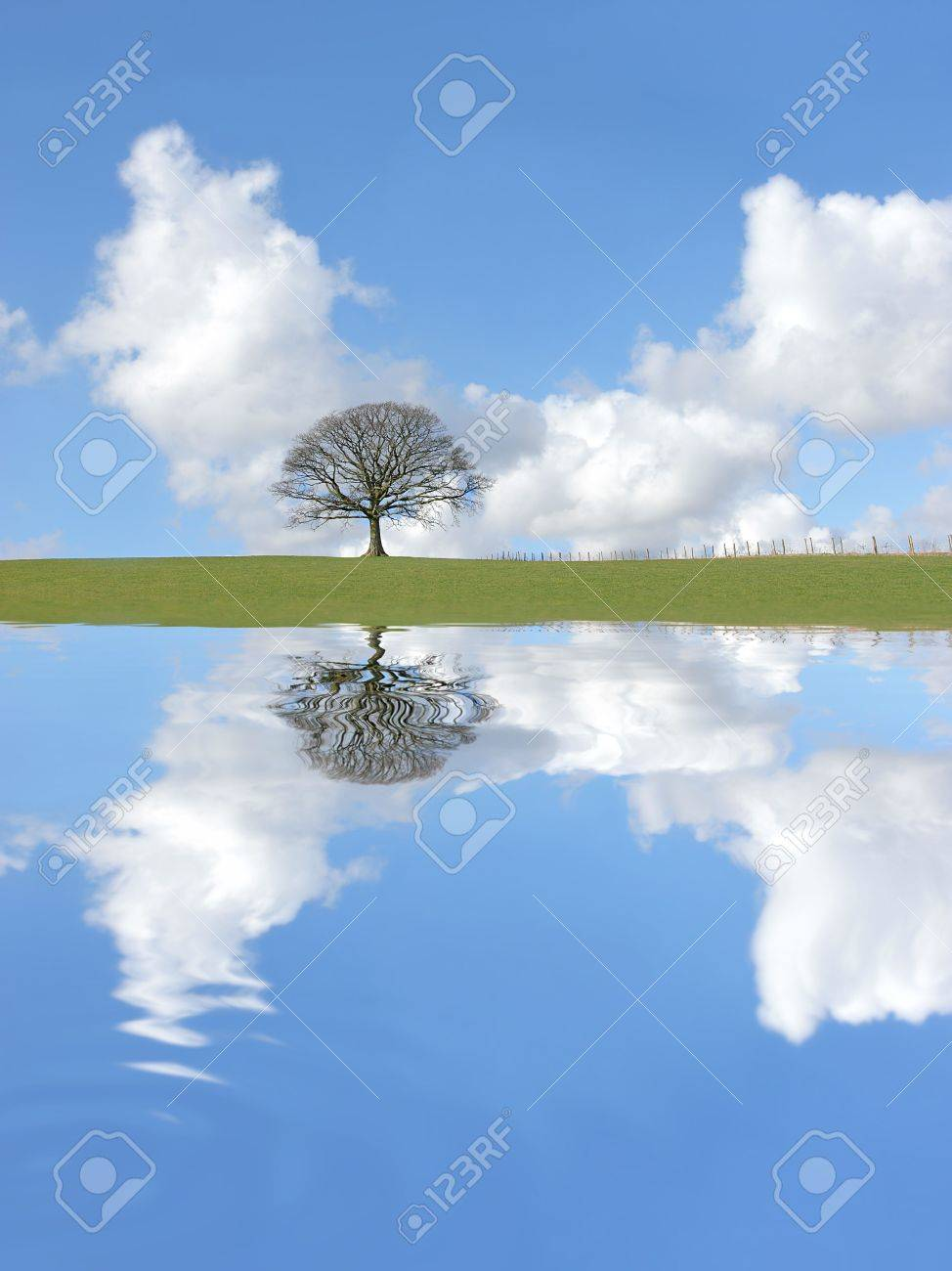 Abstract of an oak tree in winter standing alone on an area of grass, with reflection in rippled water. Set against a blue sky with cumulus clouds. Stock Photo - 2661427