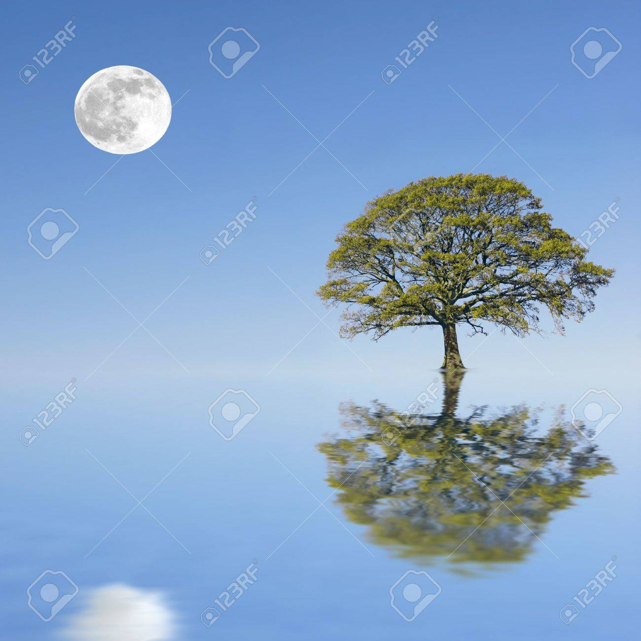 Fantasy abstract of a partially submerged oak tree in summer set against a background of a full moon and blue sky, reflected over water. Stock Photo - 2765886